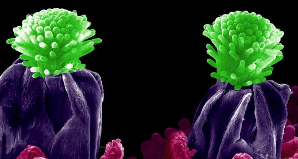 microscopia-1024x548