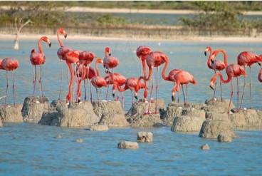 Grupo de flamencos cuidado los nidos.
